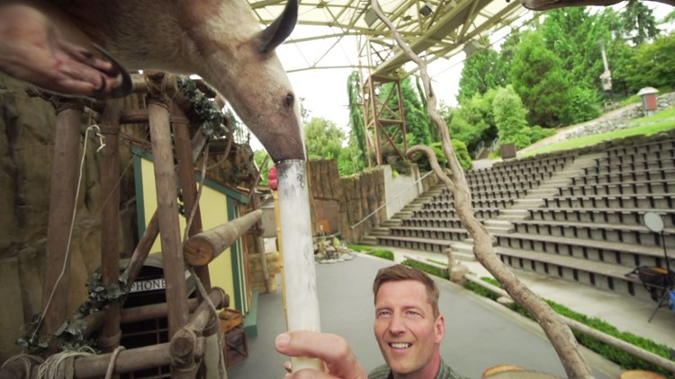 The power of positive reinforcement on display at Point Defiance Zoo and Aquarium