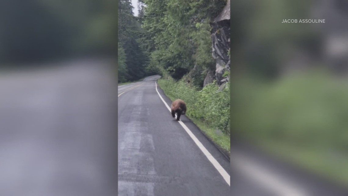 Watch: Bear spotted running along highway in Mount Rainier National Park