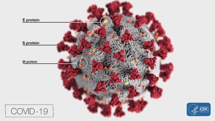 A universal vaccine for COVID-19 and some common colds? Seattle scientists are working on it