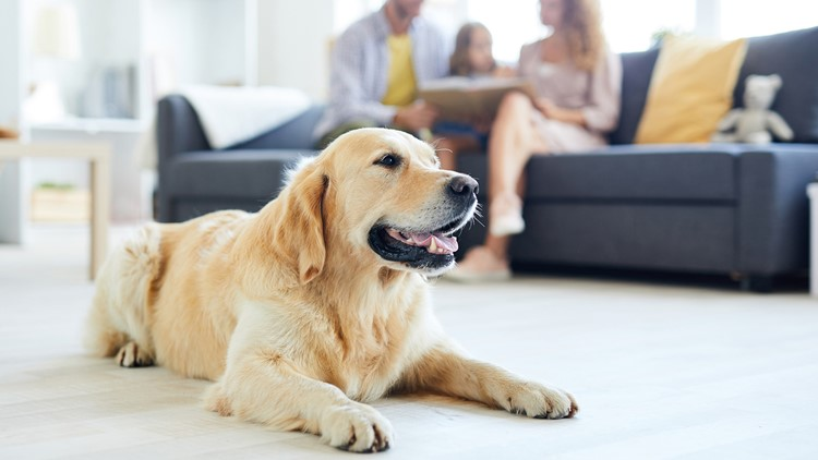 Tips to keep you and your pets safe from carbon monoxide poisoning -New Day NW