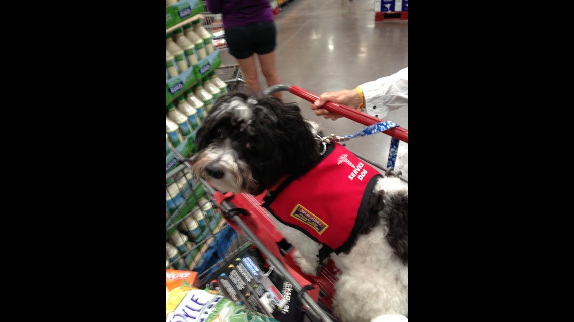 Fake Service Dogs Are Becoming A Problem King5