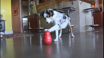 PupPod is a smart toy that makes dogs smarter