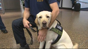 Washington's arson dog returns home after months of training