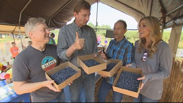 Pick your own blueberries in Snohomish! - Field Trip Friday