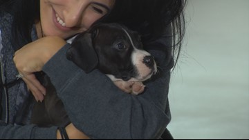 The Seattle non-profit that lets you rent real-life puppies
