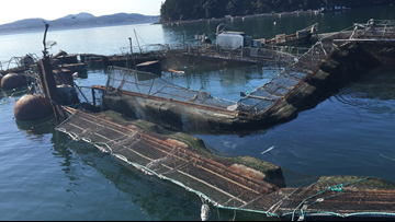 Cooke Aquaculture to pay $2.75 million over 2017 net-pen collapse