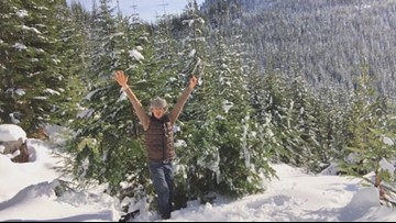 Where it's OK to cut your own Christmas tree