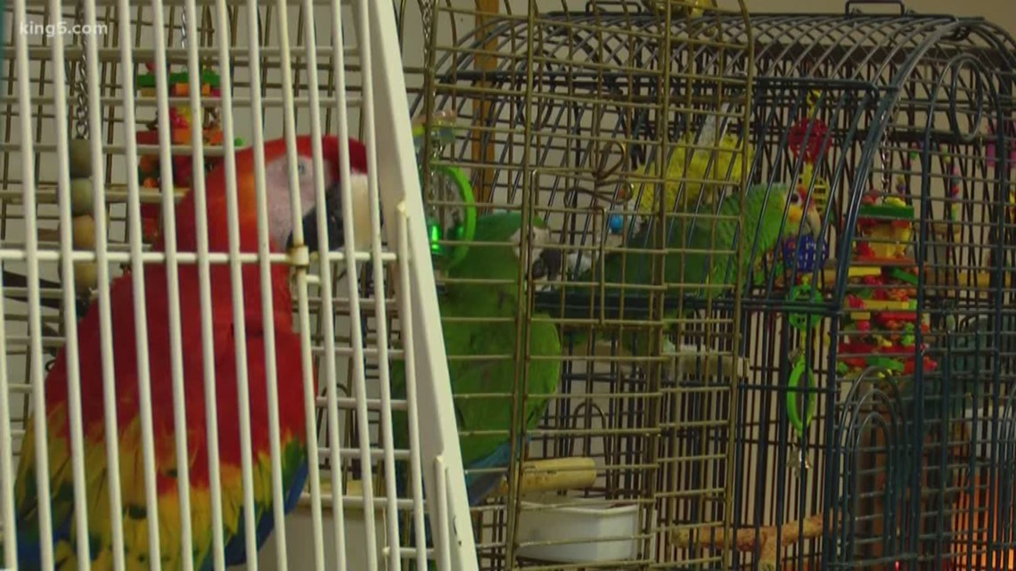 26 exotic birds among 53 animals removed from Thurston County home