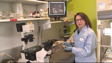 Test helps identify best drugs to fight cancer