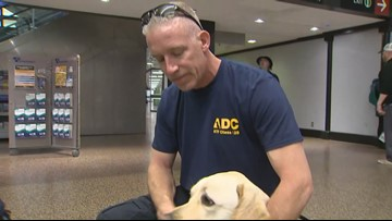 Washington's only arson detection dog K9 Hansel returns home after months of training