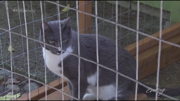 Catios bring the outdoor life to indoor cats - KING 5 Evening