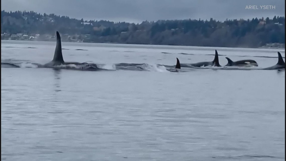 Vulcan technology helps researchers study endangered orcas in Puget Sound