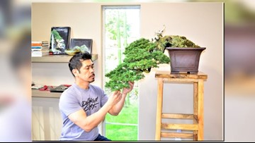 Learn the art of the Bonsai from a local master to ease your busy mind