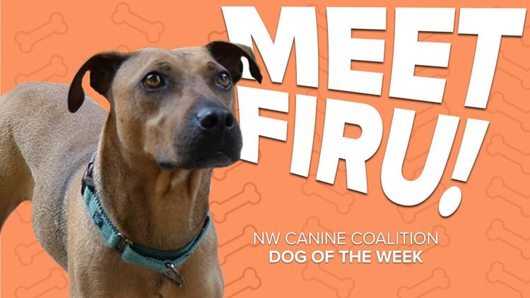 Canine Rescue of the Week: Firu