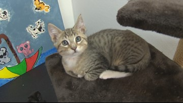 A furry busy time of year at Woodinville animal shelter