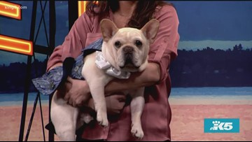 Your dog could be a star at The Seattle Kennel Club's Woof by Woofwest - New Day Northwest