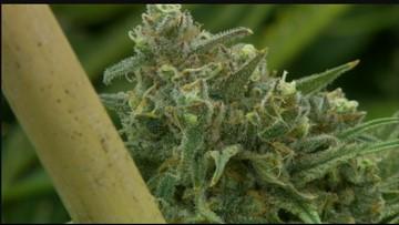 Senate passes bill to vacate some marijuana convictions in Washington state