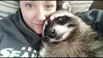 Mae the pet raccoon cannot return to Seattle family, judge rules