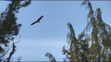 Eagle neighbors help Port Orchard woman with chronic pain