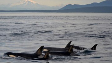 Tree houses, ocean hikes and the best whale watching spot: more Best Northwest Escapes winners