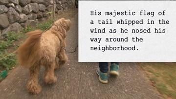 Dog-walking wordsmith documents the secret lives of pets