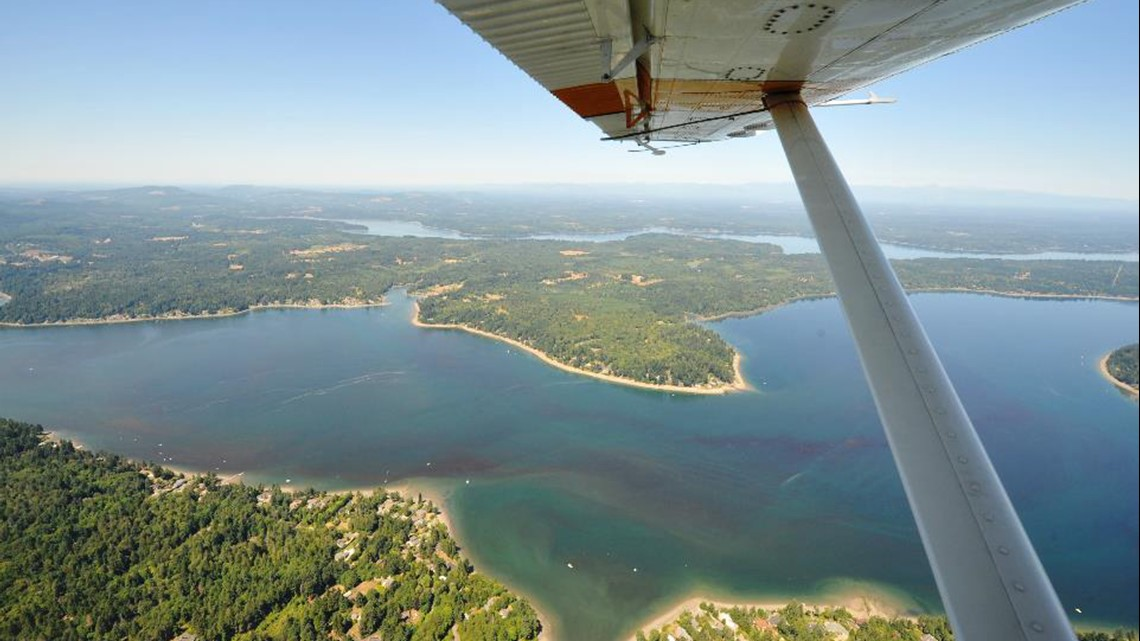 Is that algae safe? How to identify blooms in Washington waters