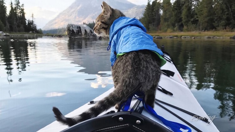 Magic is a one-year-old cat, who's outdoor adventures around the Pacific Northwest are shared with the world through social media.