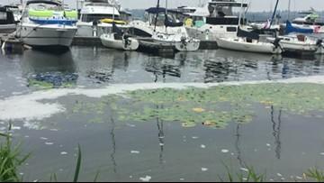 King County ecologist addresses concerns of foam on Lake Washington