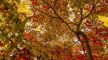 Why leaves change color in fall