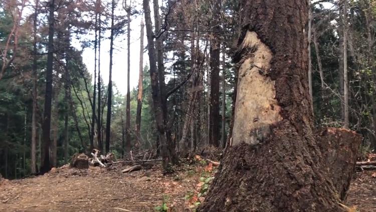 New video of stolen plane crash site on Ketron Island
