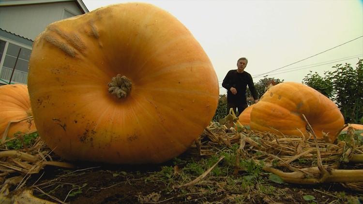 pumpkins_1538010891779.JPG