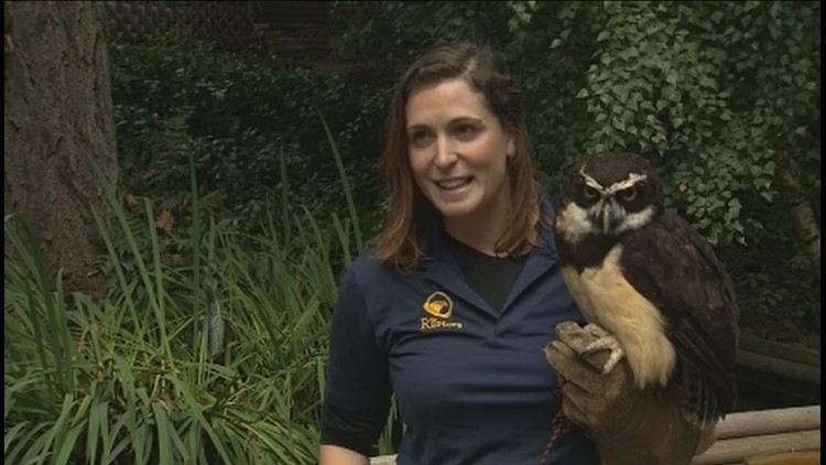 Robyn Radcliffe and Elton the owl