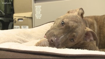 Reward offered for information on emaciated dogs found in Seattle