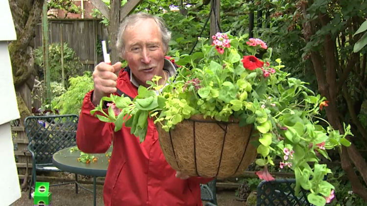 Tough love for hanging baskets - Gardening with Ciscoe