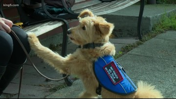 Seattle woman shares what you need to know about service animals