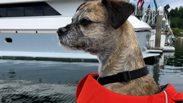 Five tips for boating safely with your dog in the PNW