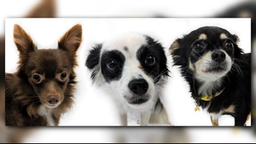 255 dogs rescued from illegal puppy mills in Washington