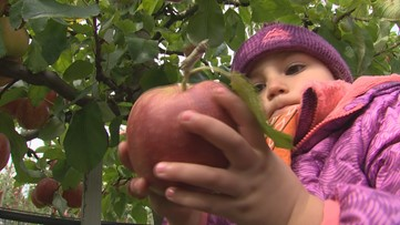 The apple capitol of the world just may be Lynden