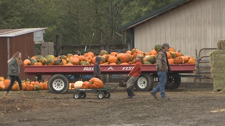 pumpkin farm_1539274086777.JPG.jpg