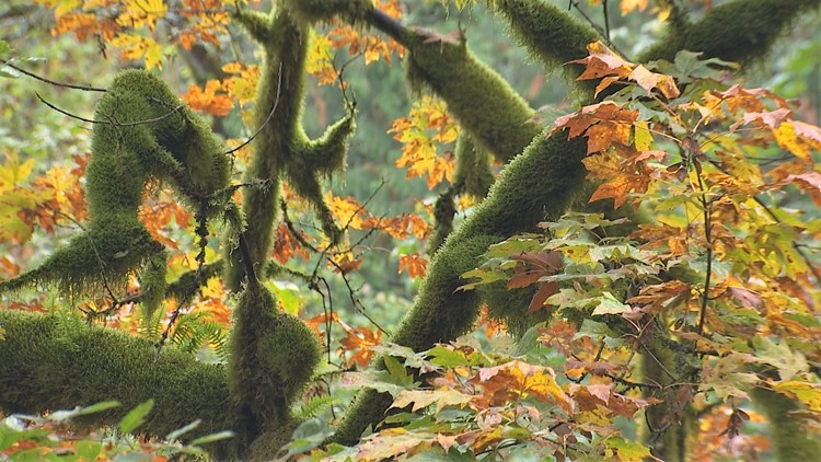 Five hikes for seeing fall colors in Western Washington