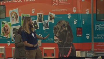 Pets rescued from Hurricane Michael arrive in Seattle for adoption