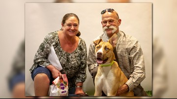 Adopted dog returned to Phoenix shelter because owners wanted 'more of a challenge'