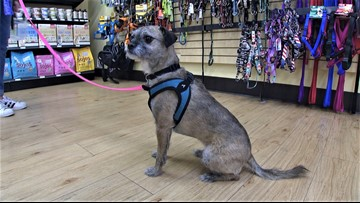 Mud Bay is the doggone best place for pet supplies