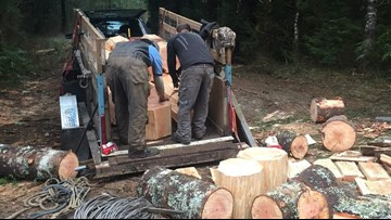Poachers caught cutting 18 trees on Washington forest land