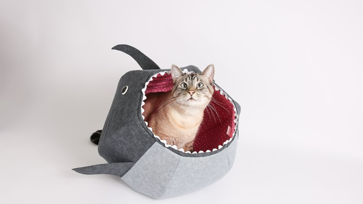 The Bellevue-based Cat Ball is on-trend right meow