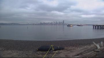 $5,500 reward offered after sea lions found shot near West Seattle