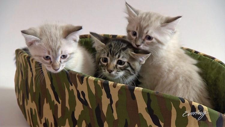 cat1 (2)_1542423097107.JPG.jpg