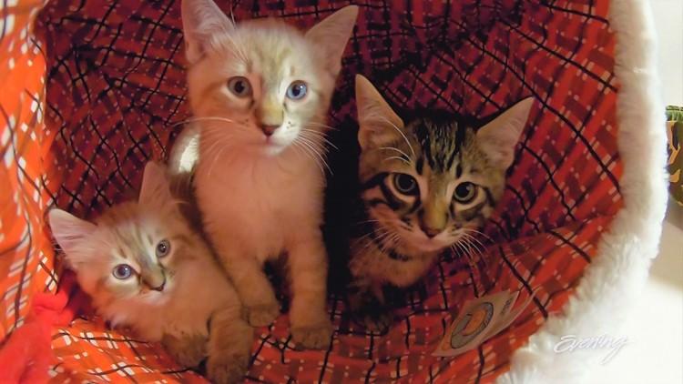 cat2 (2)_1542423097109.JPG.jpg