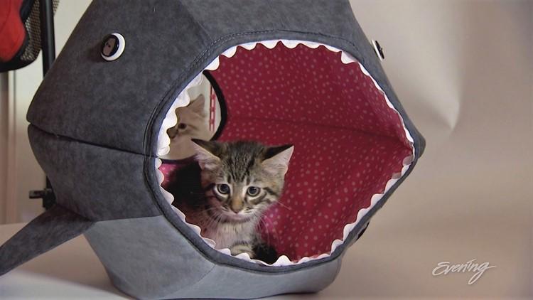 cat3 (2)_1542423102182.JPG.jpg