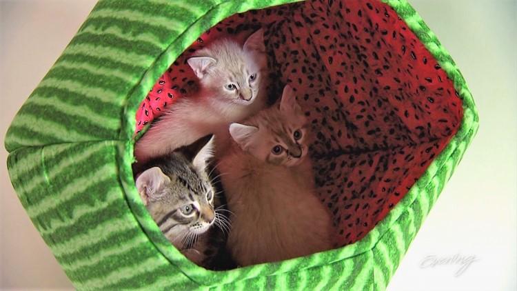 cat4 (3)_1542423102520.JPG.jpg